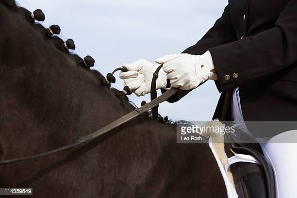 close-up of dressage horse with rider