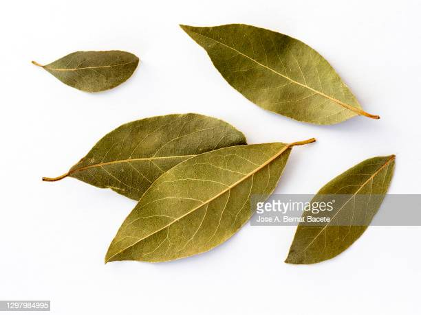 close-up of dried bay leave for cooking on a white background. - twijg stockfoto's en -beelden
