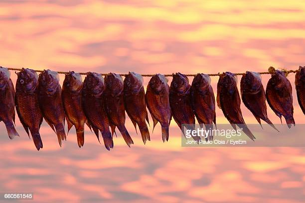 Close-Up Of Dried Fish Hanging From Rope At Bay