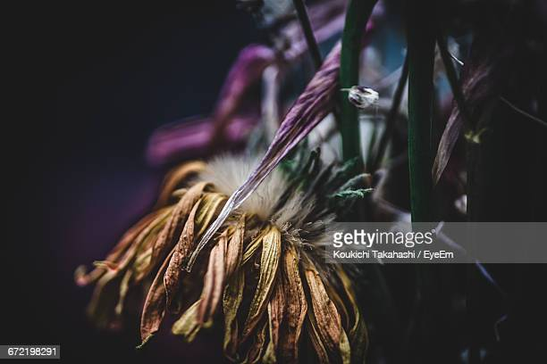 close-up of dried flowers at night - koukichi koukichi stock photos and pictures