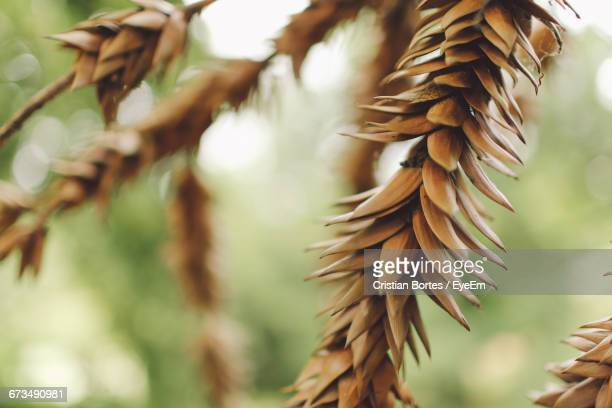 close-up of dried plants - bortes stock-fotos und bilder
