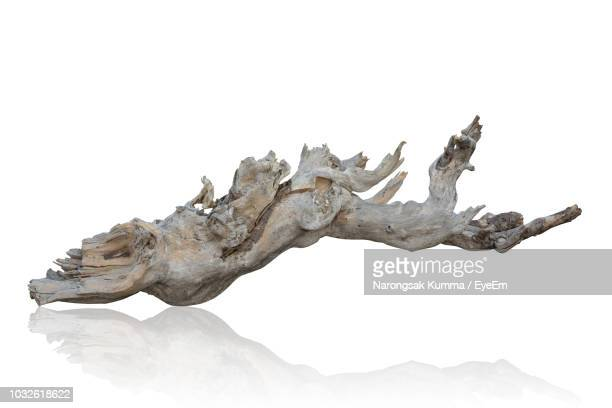close-up of driftwood against white background - tak plantdeel stockfoto's en -beelden