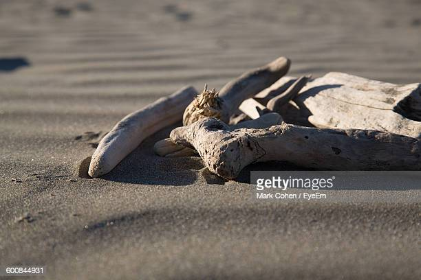 Close-Up Of Driftwood On Sand At Beach