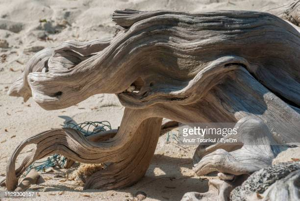 Close-Up Of Driftwood On Sand
