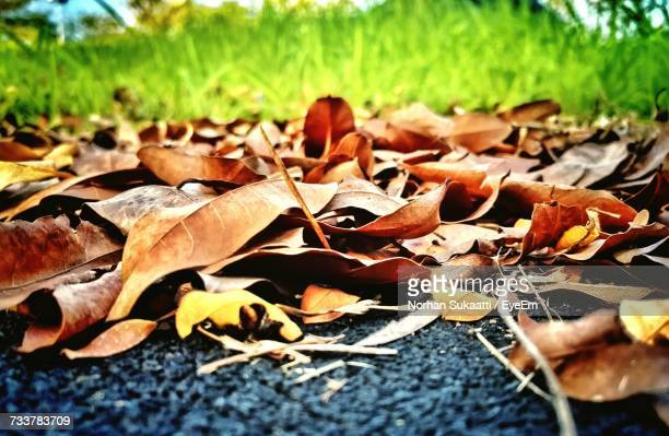 Close-Up Of Dry Autumn Leaves On Field