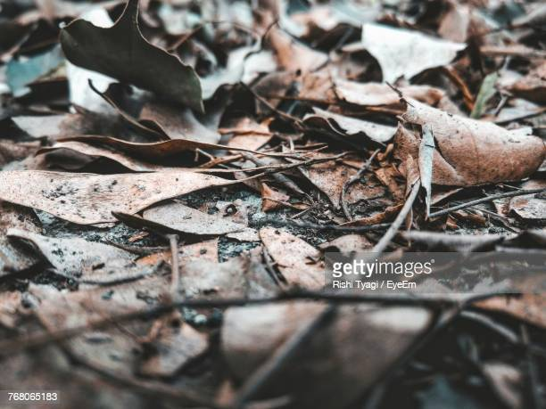 Close-Up Of Dry Autumn Leaves