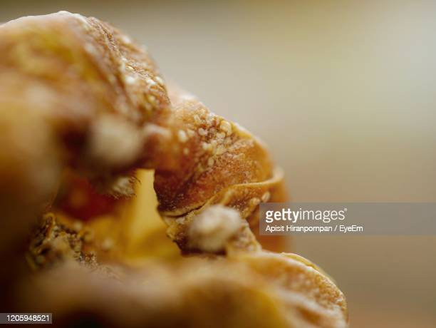 close-up of dry cactus - apisit hiranpornpan stock pictures, royalty-free photos & images