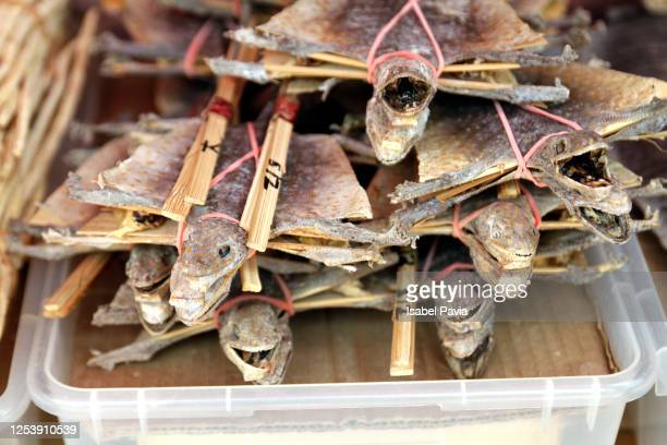 close-up of dry fish for sale at market - フラットフィッシュ ストックフォトと画像
