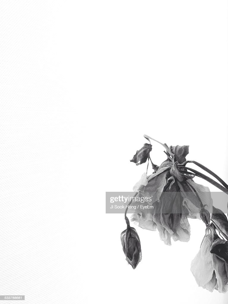 Close-Up Of Dry Flower : Foto stock