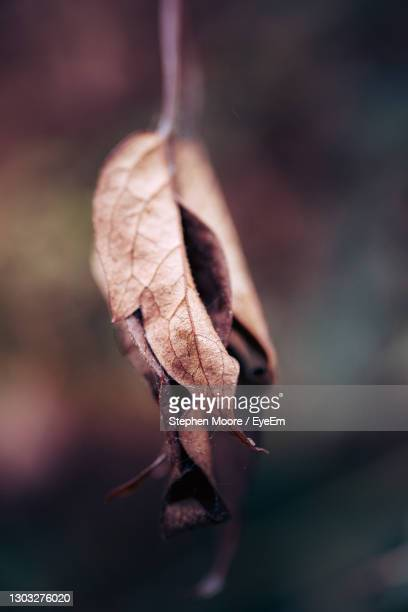 close-up of dry leaf during autumn - leaf stock pictures, royalty-free photos & images