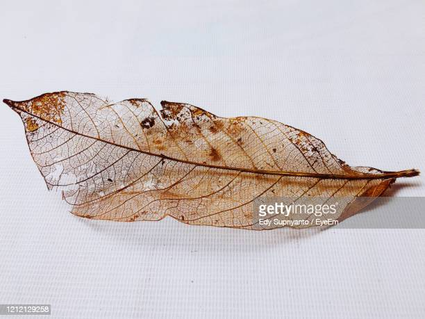 close-up of dry leaf on table - west kalimantan stock pictures, royalty-free photos & images
