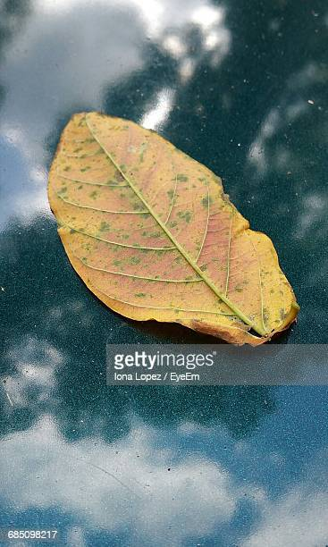 close-up of dry leaf on water - lopez stock pictures, royalty-free photos & images