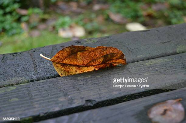 Close-Up Of Dry Leaf On Wooden Surface
