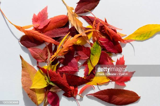 close-up of dry leaves against white background - frank schrader stock pictures, royalty-free photos & images