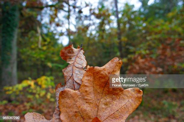 close-up of dry leaves in forest during autumn - uelzen - fotografias e filmes do acervo
