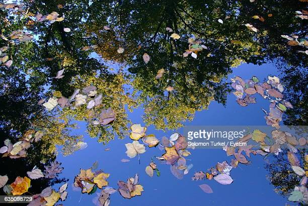 close-up of dry leaves in water - solomon turkel stock pictures, royalty-free photos & images