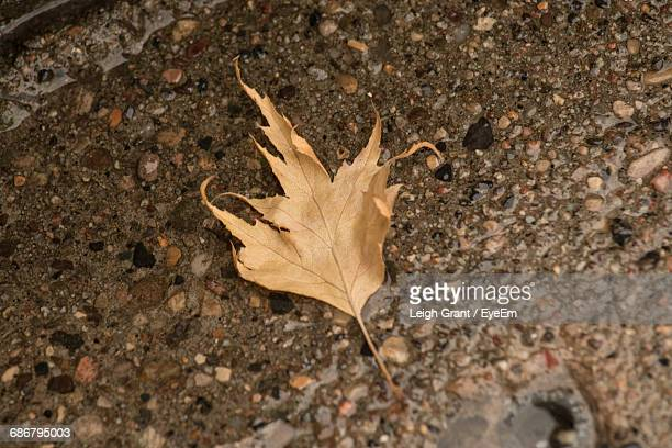 close-up of dry maple leaf on field - leigh grant stock pictures, royalty-free photos & images