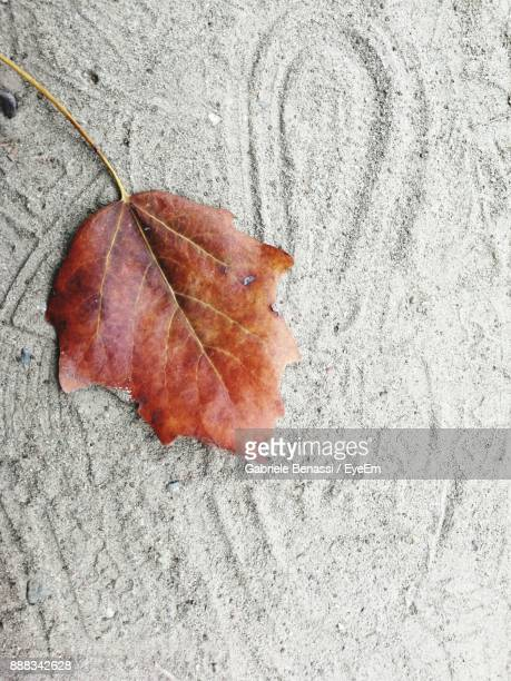 Close-Up Of Dry Maple Leaf