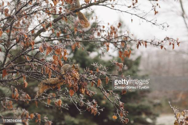 close-up of dry plant during winter - bortes stock pictures, royalty-free photos & images