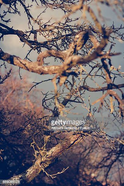 close-up of dry twigs and branches in forest - albrecht schlotter foto e immagini stock