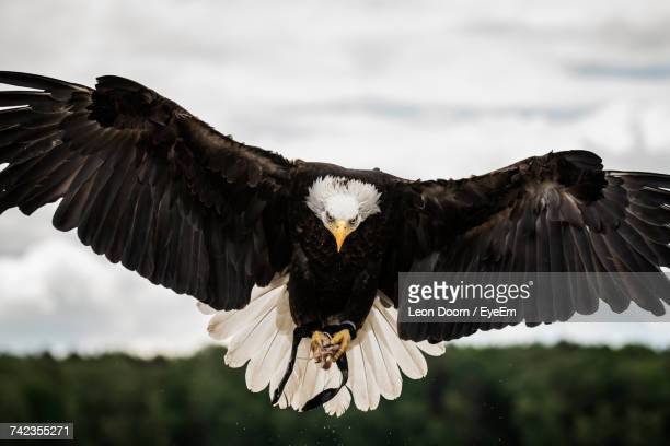 Close-Up Of Eagle Flying Against Sky