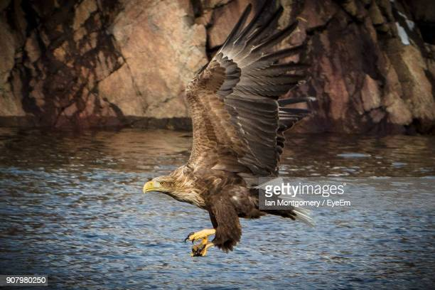 close-up of eagle flying over lake - animal body part stock pictures, royalty-free photos & images