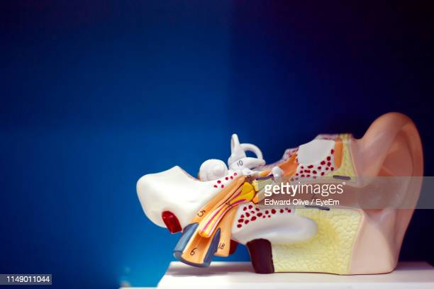 close-up of ear model on table against blue background - ear canal stock-fotos und bilder