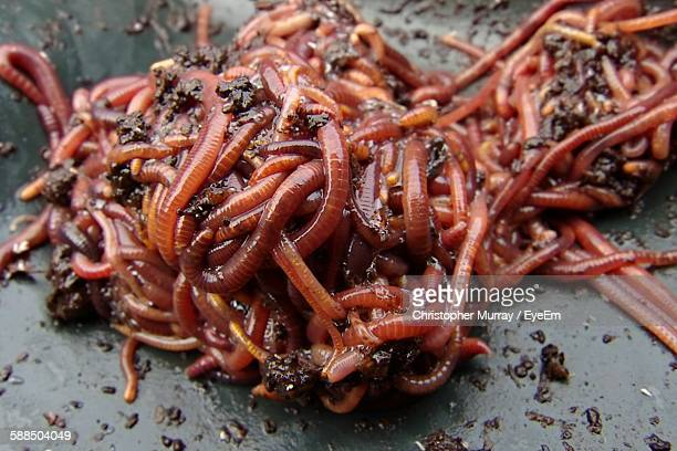 close-up of earthworms on floor - worm stock photos and pictures