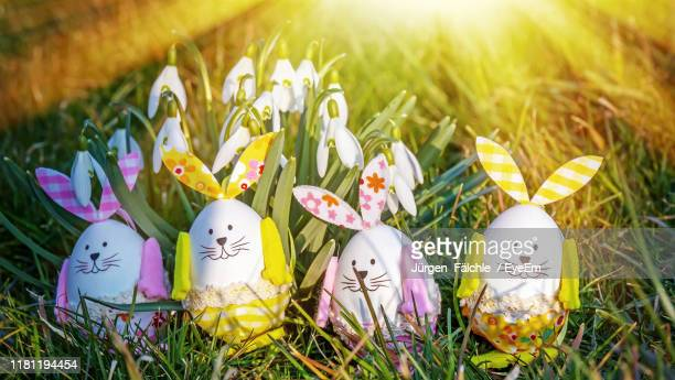 close-up of easter bunnies on grassy field - easter bunny stock pictures, royalty-free photos & images