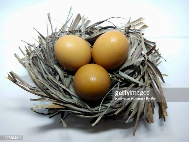 close-up of eggs in nest - easter sunday stock pictures, royalty-free photos & images