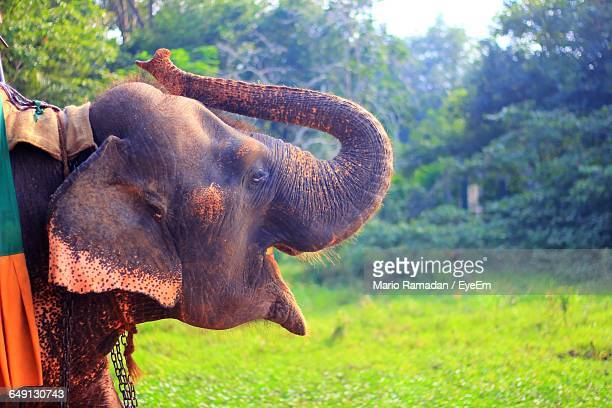 Close-Up Of Elephant On Grassy Field