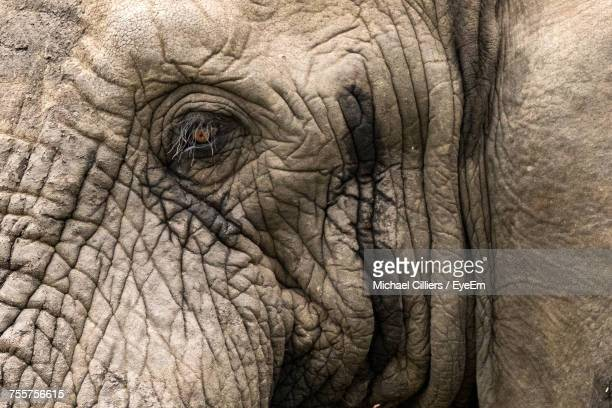 Close-Up Of Elephant
