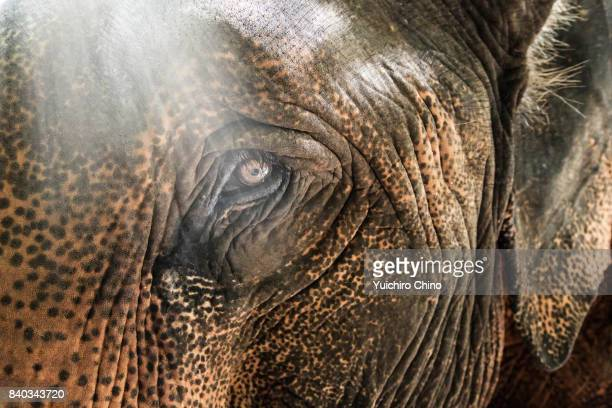 close-up of elephant - elephant face stock photos and pictures
