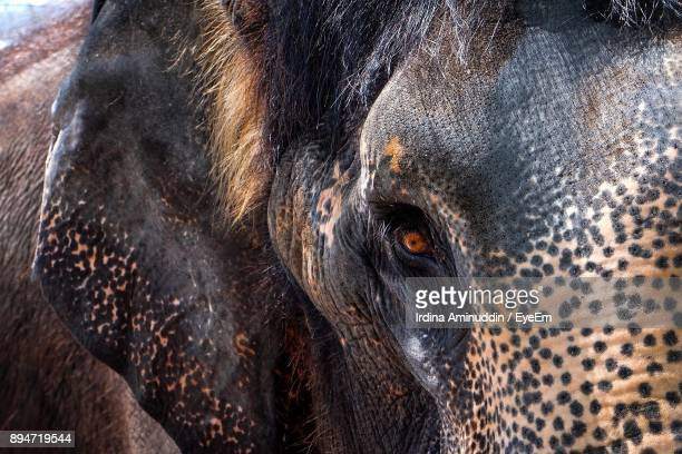close-up of elephant - elephant head stock-fotos und bilder