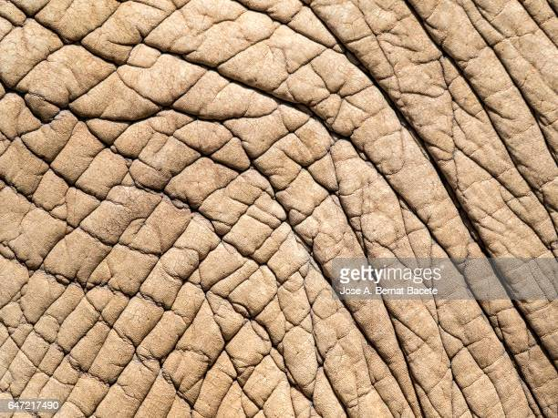 Close-up of elephant skin Illuminated by sunlight