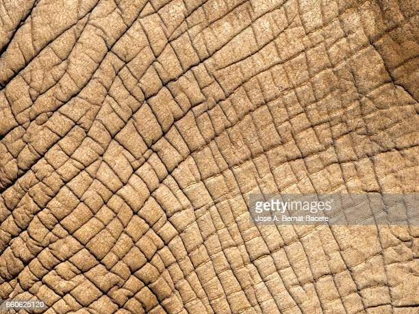 close-up of elephant skin illuminated by sunlight - fauna silvestre stock pictures, royalty-free photos & images