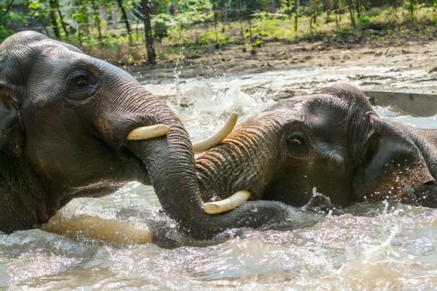 Close-up of elephants at riverbank,Szeged,Hungary