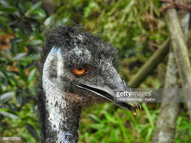 Close-Up Of Emu Against Trees