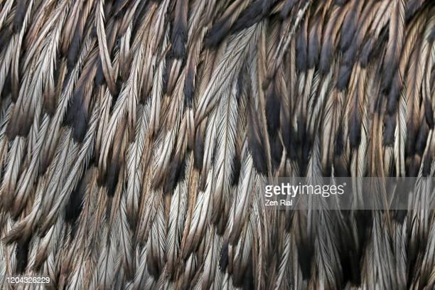 close-up of emu's back feathers - struisvogelveer stockfoto's en -beelden