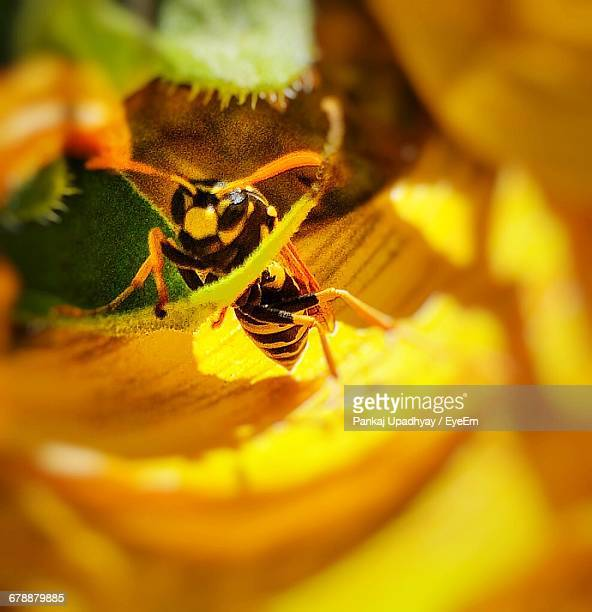 close-up of european paper wasp on flower - paper wasp stock pictures, royalty-free photos & images