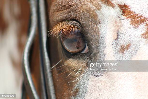 Close-Up Of Eye Of Horse