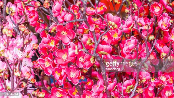 World S Best Chinese New Year Deco Stock Pictures Photos