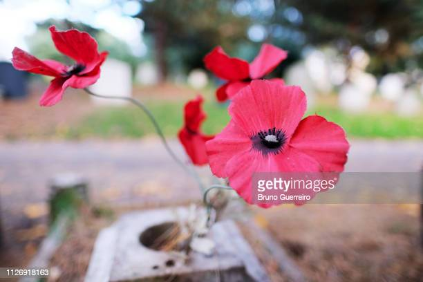 close-up of fake poppy flowers on tombe at cemetery - grab stock-fotos und bilder