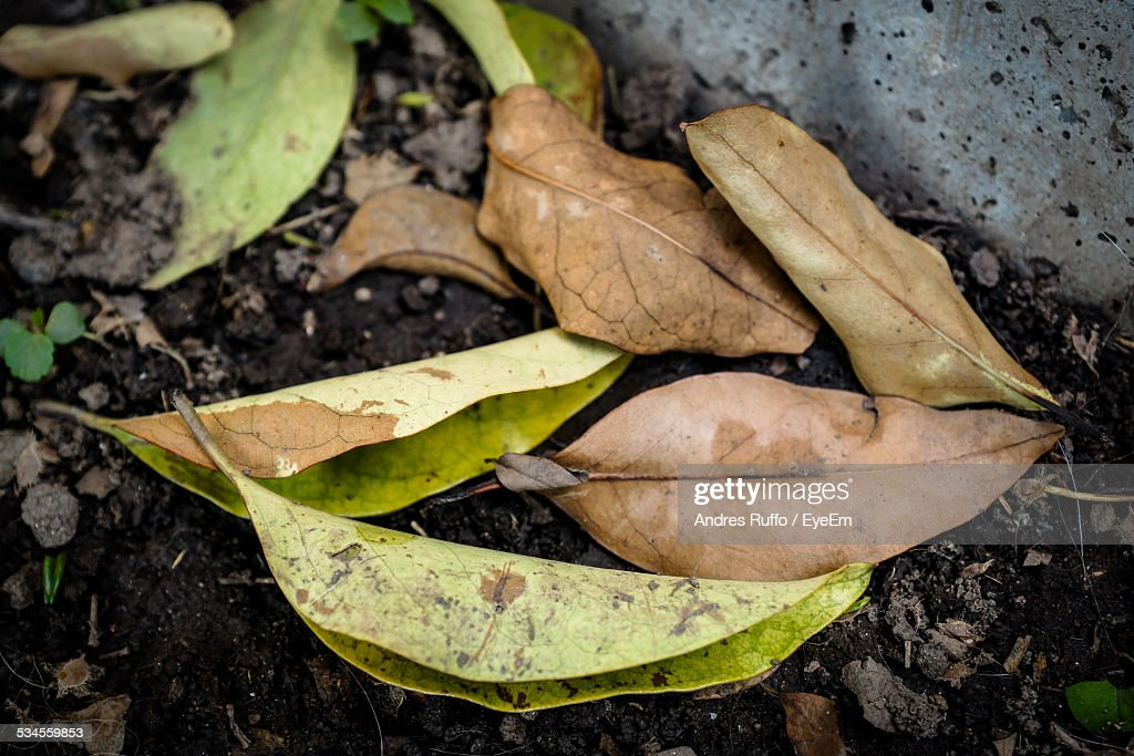 Close-Up of Fallen Dry Autumn Leaves : Stock Photo