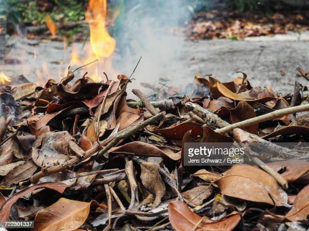 Close-Up Of Fallen Dry Leaves Heap Against Fire