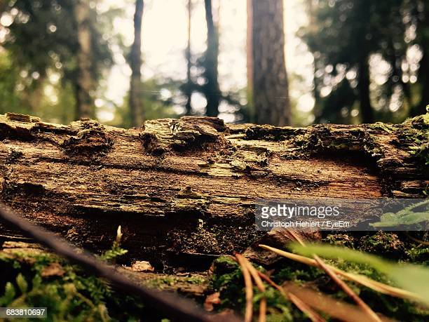 close-up of fallen tree trunk in forest - log stock pictures, royalty-free photos & images
