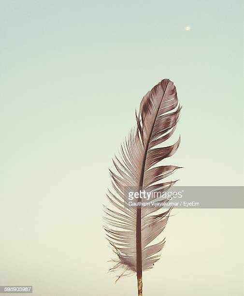Close-Up Of Feather Against Clear Sky