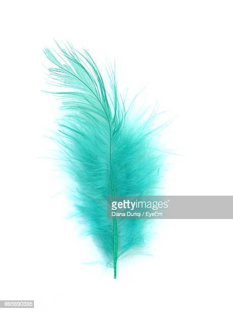 close-up of feather against white background - piuma foto e immagini stock