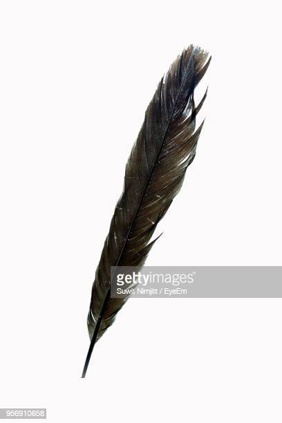 close-up of feather over white background - feather stock pictures, royalty-free photos & images