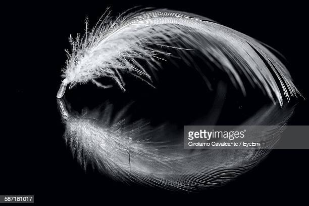 Close-Up Of Feather With Reflection Over Black Background